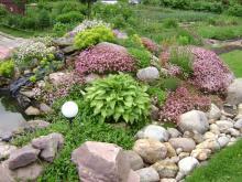 Какие растения и как правильно выращивать на альпийской горке