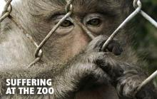 The problem of existence of zoos in today`s society
